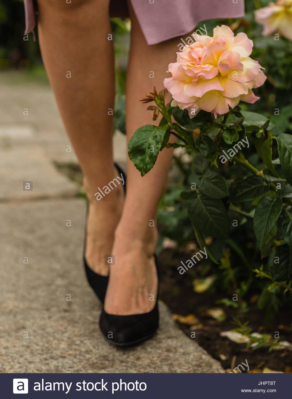 Rose mit rosa Blütenblätter mit eine gelbe Färbung und eine zu Fuß ...