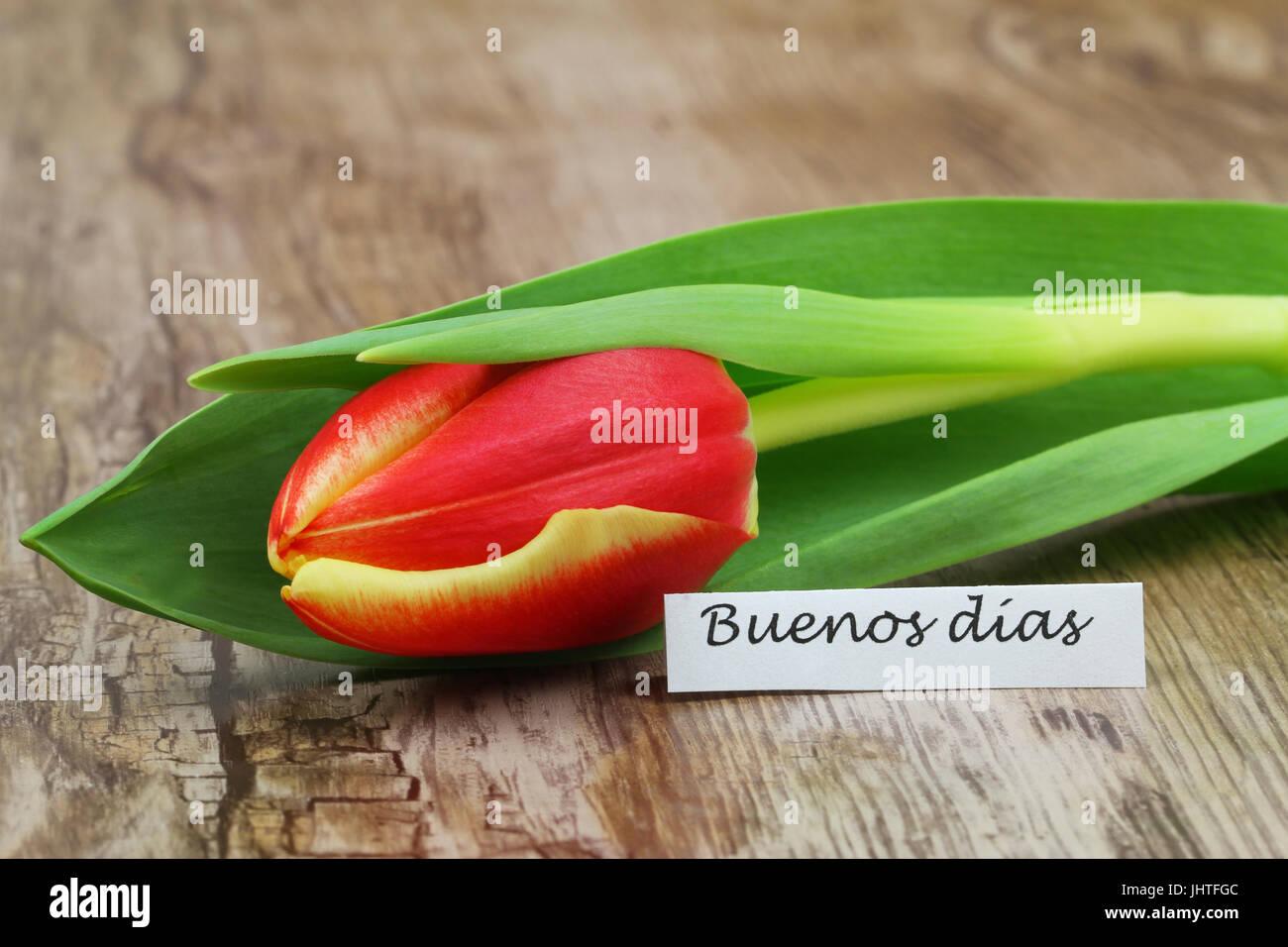 Buenos Dias Guten Morgen In Spanisch Mit Roten Und Gelben