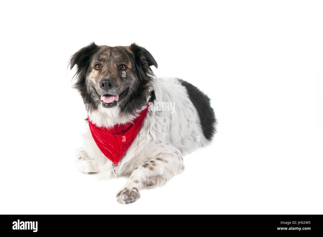 Netter Mischling Hund im Urlaub Weihnachten Schal Halstuch ...