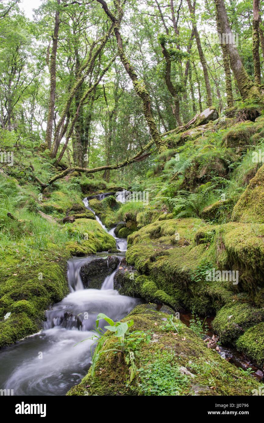 Kleiner Wasserfall im Wald. Stockbild