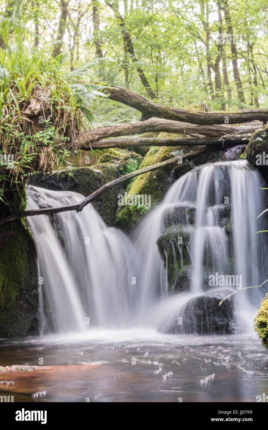 Wasserfall im Wald Stockbild