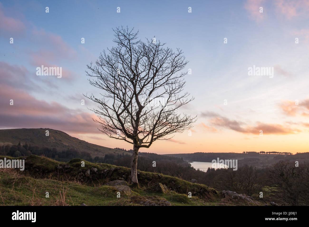 Einsamer Baum oberhalb des Sees Stockbild