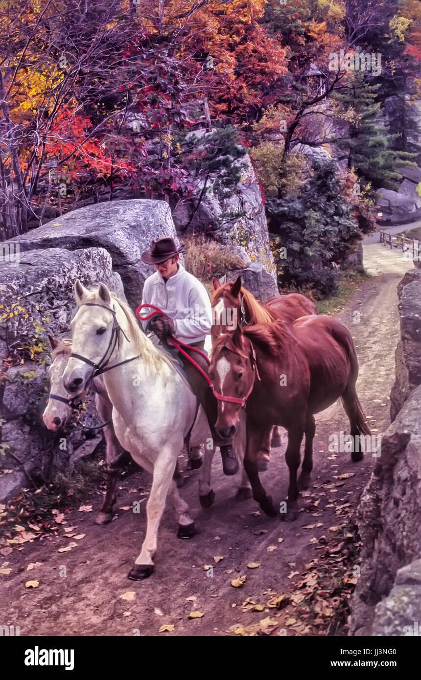 20-30 Mann weiß Reitpferd mit 3 anderen im Schlepptau. Herbst Blätter auf den Bäumen, schmalen Pfad, Stockbild