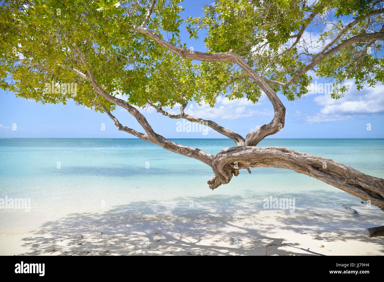 Blick auf das Meer mit Baum am Strand in Aruba, Karibik Stockbild