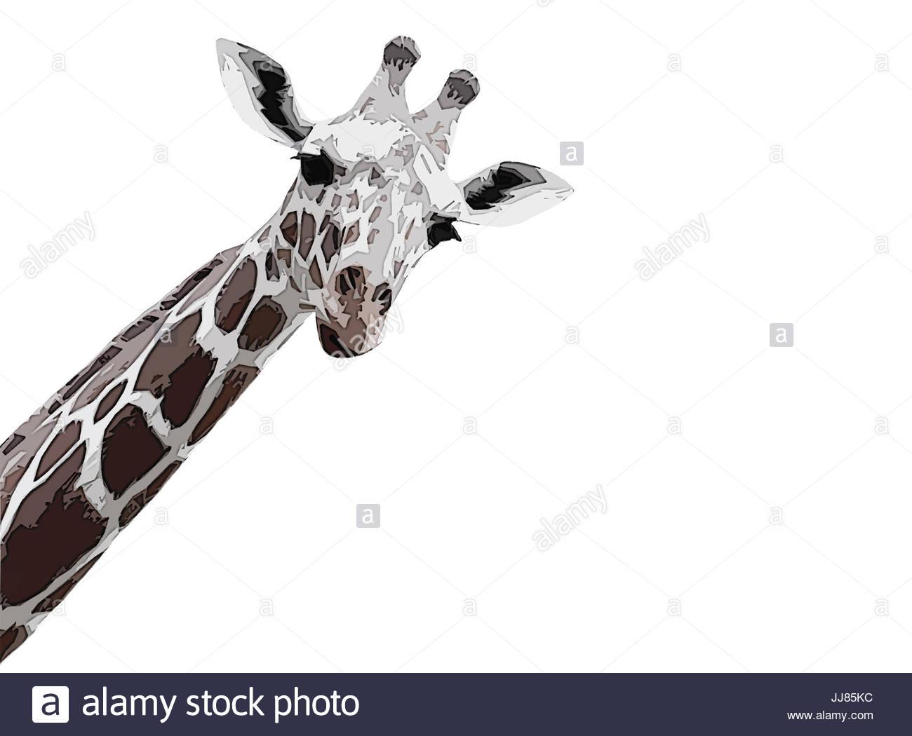 Europa, Deutschland, Hessen, Frankfurt, im Zoo in Frankfurt, neugierig Abstrakte giraffe closeup, Giraffe kunstvoll Stockbild