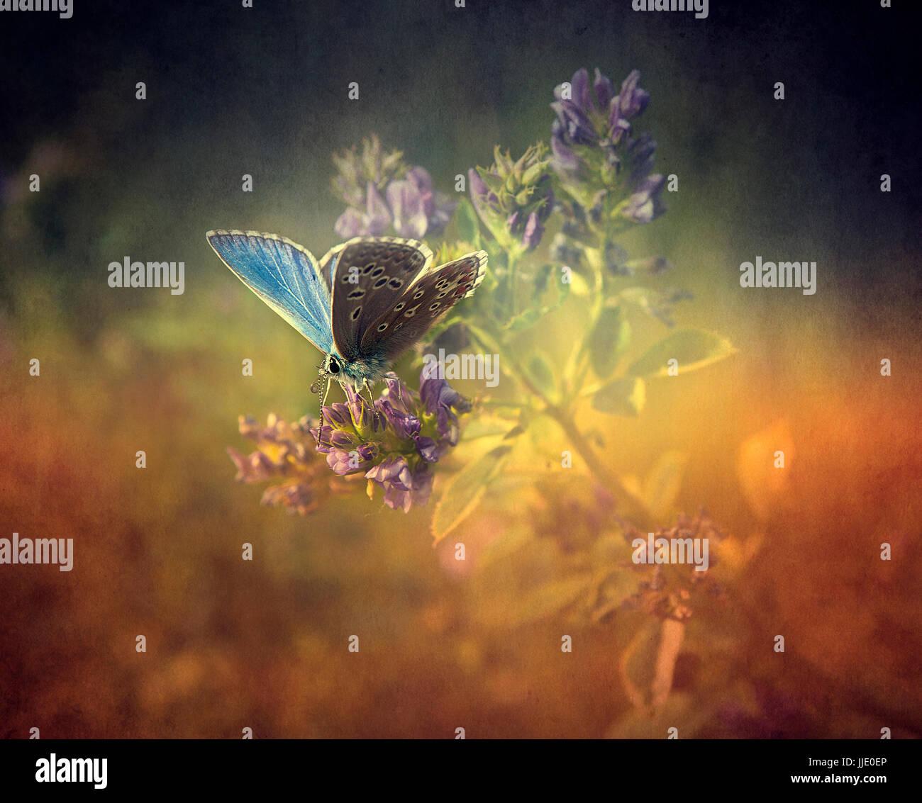 Schmetterling auf Blume Stockbild
