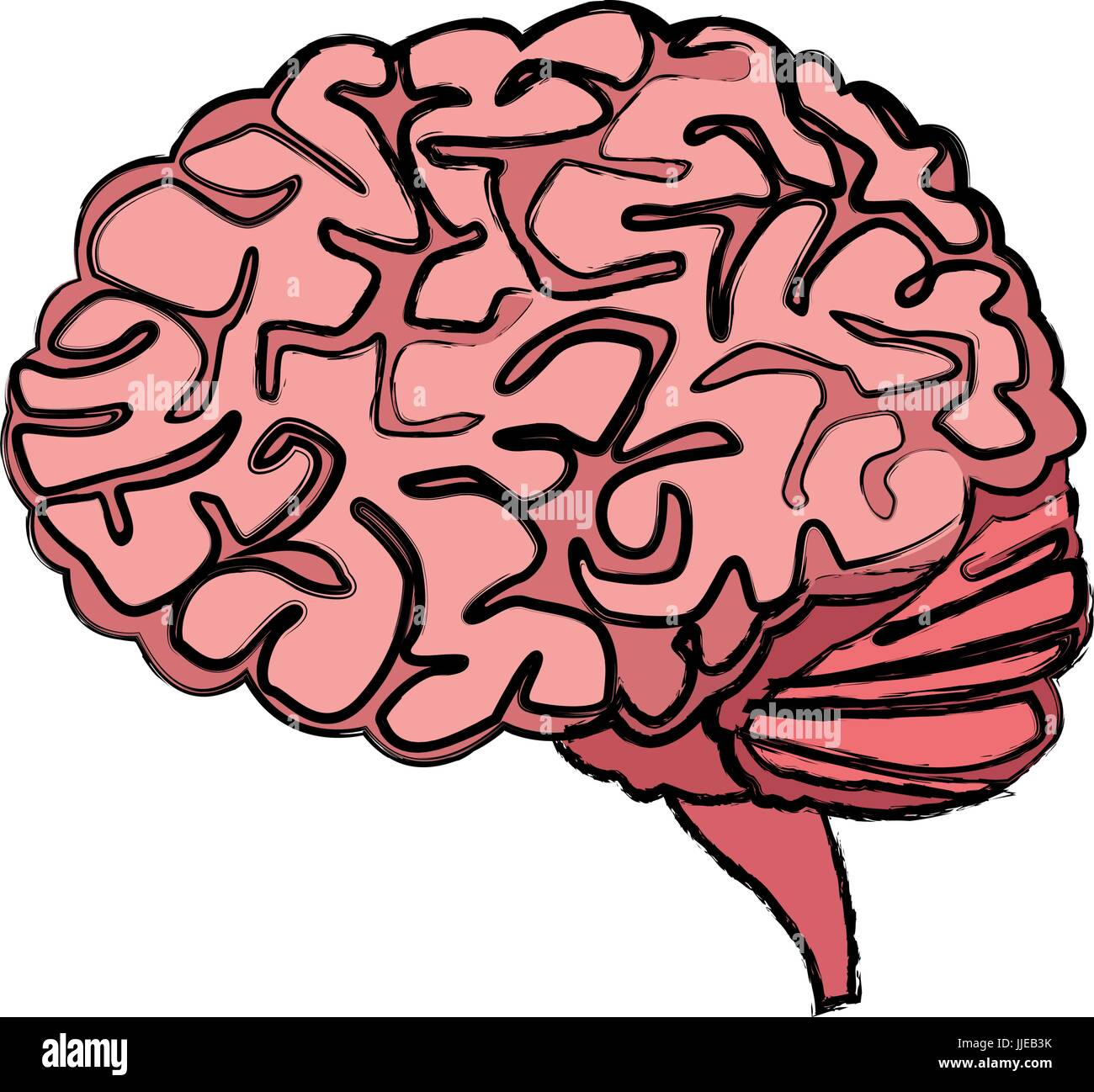Brain Lobes Stockfotos & Brain Lobes Bilder - Alamy