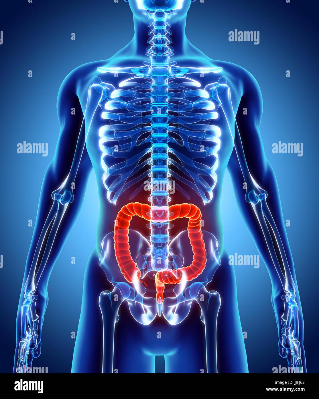 Tolle Anatomie Und Physiologie Des Verdauungssystems Prüfung ...