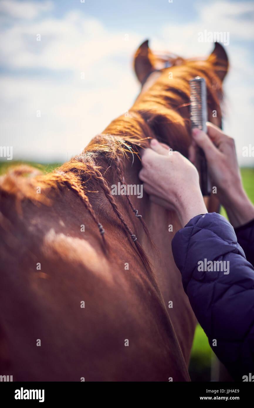 Eine junge Frau, die ihr Pferd auf eine Koppel Fellpflege. Stockbild