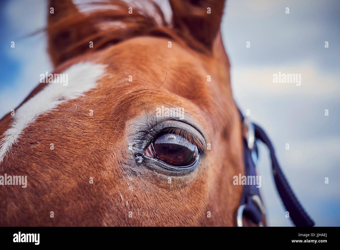 Detail eines Pferdes Auge. Stockbild