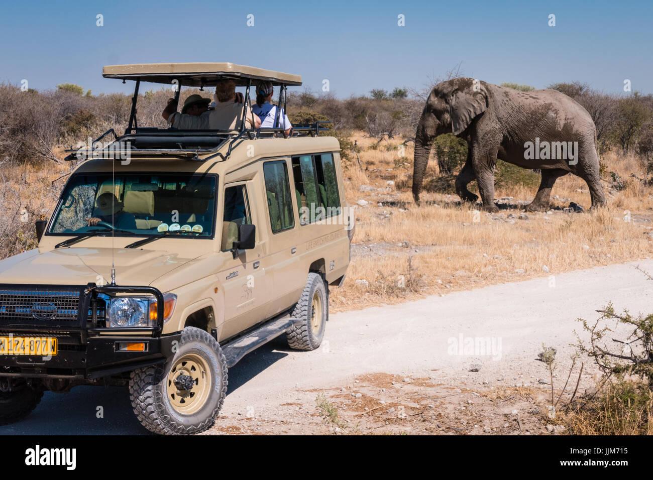 Touristen fotografieren Elefant aus einem Safari-Fahrzeug im Etosha Nationalpark, Namibia, Afrika Stockbild
