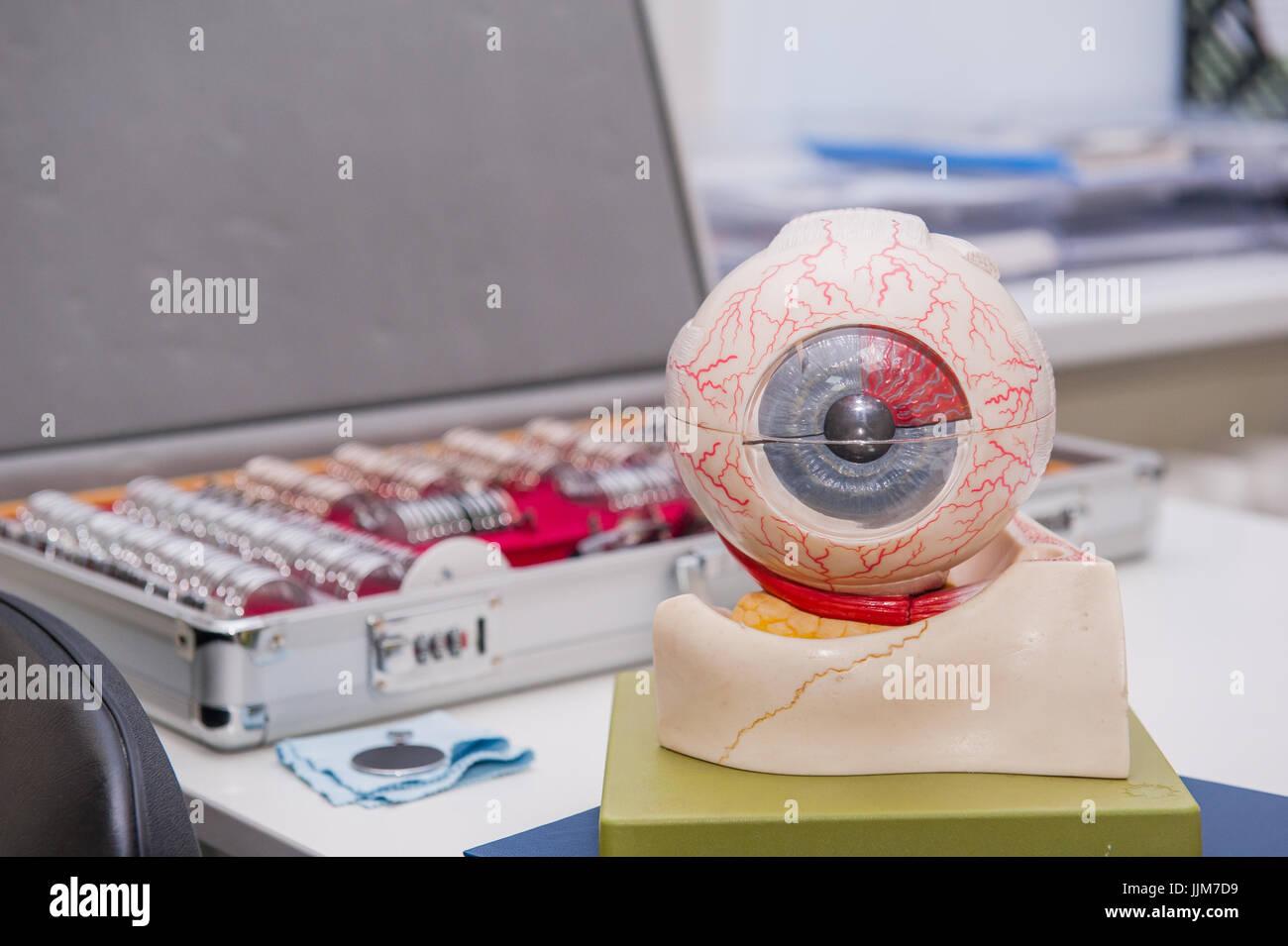 Menschliche Auge Anatomie Modell auf dem Hintergrund der Satz von ...