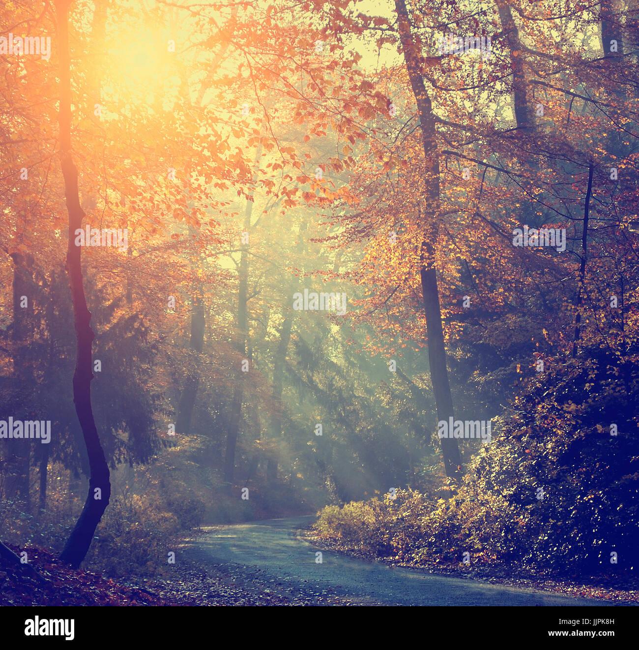 Herbstlichen Wald und Straße im Sonnenaufgang Stockbild