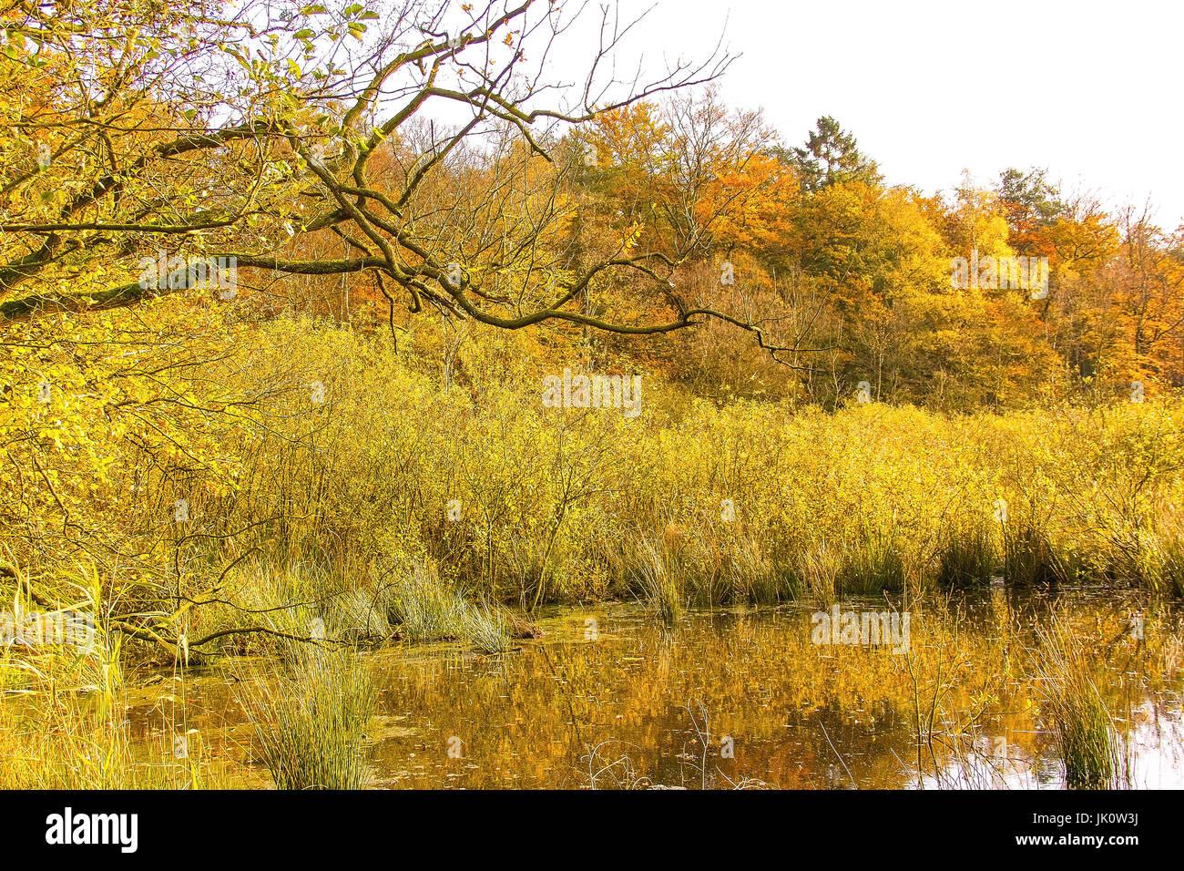 Bank-Bereich von einem Waldteich in der Mitte eine Pause Holz im Herbst gefärbten Uferbereich Eines Waldweihers Inmitten Eines Bruchwaldes in herbstfarben Stockfoto