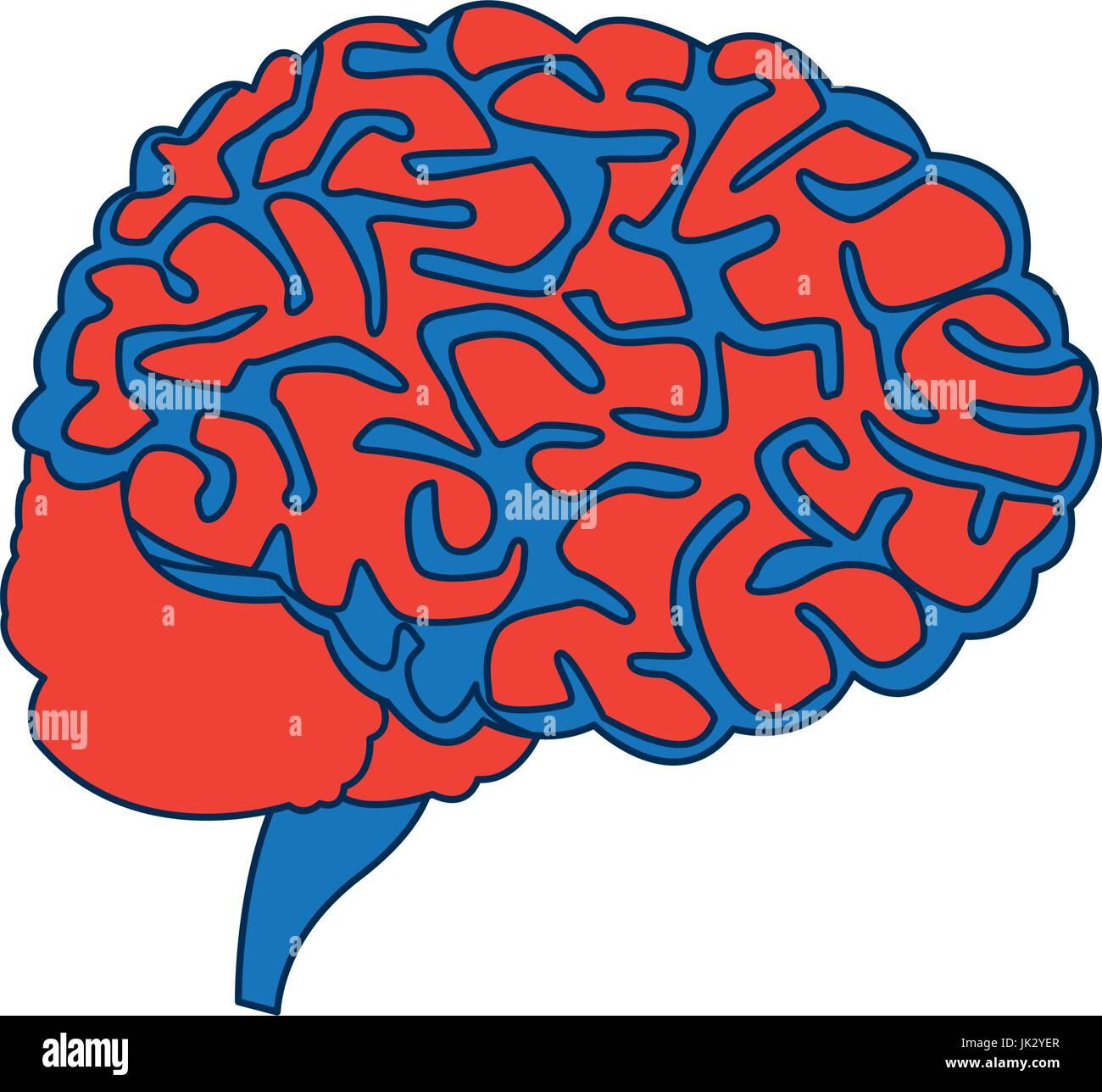 menschliche Gehirn für medizinische gesunde Speicher Anatomie design ...