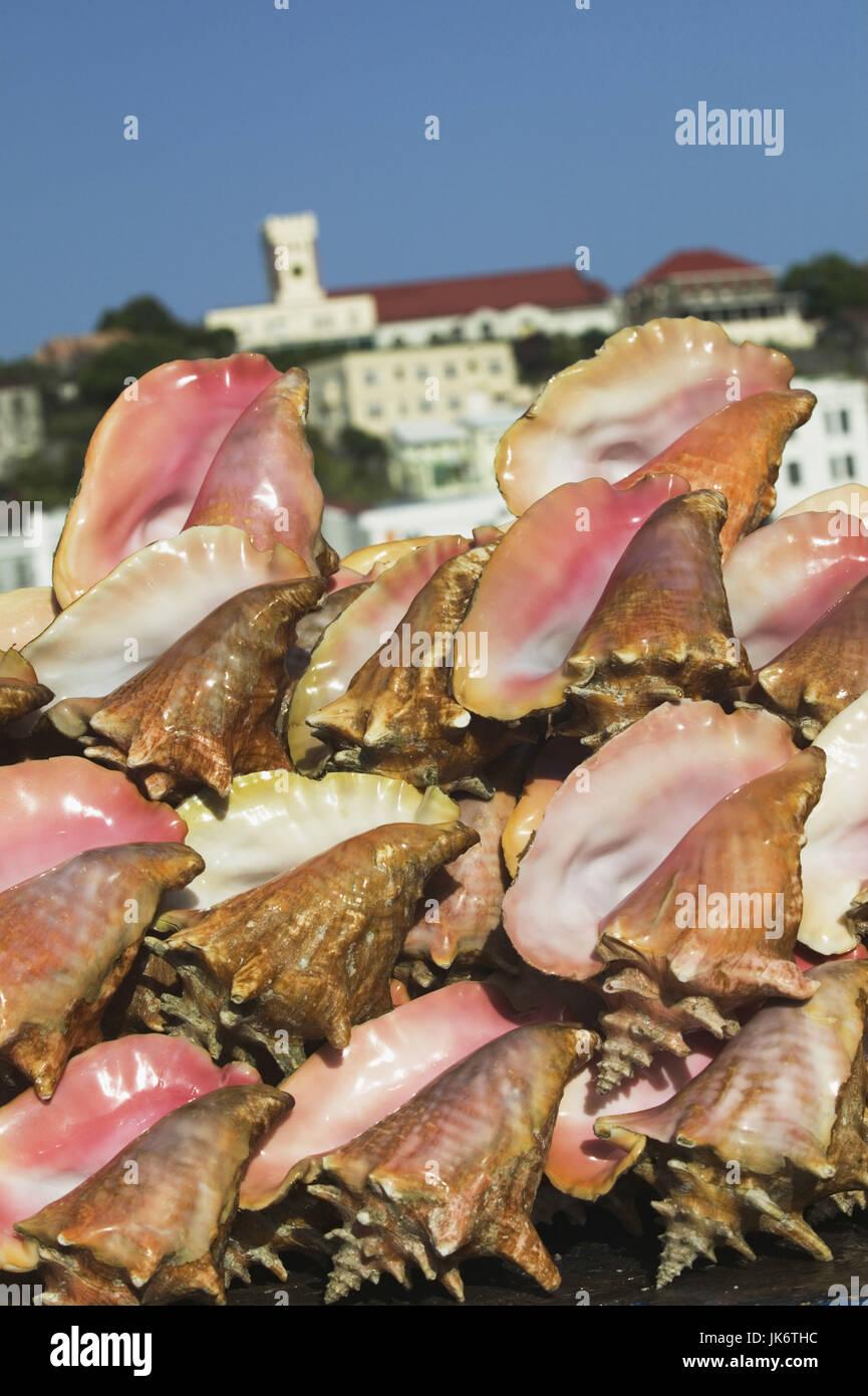 Conch Muscheln Meeresschnecken, Muscheln, Schnecken, Gehäuse, Kalkgehäuse, Kalkschale, Fechterschnecken, Stockbild