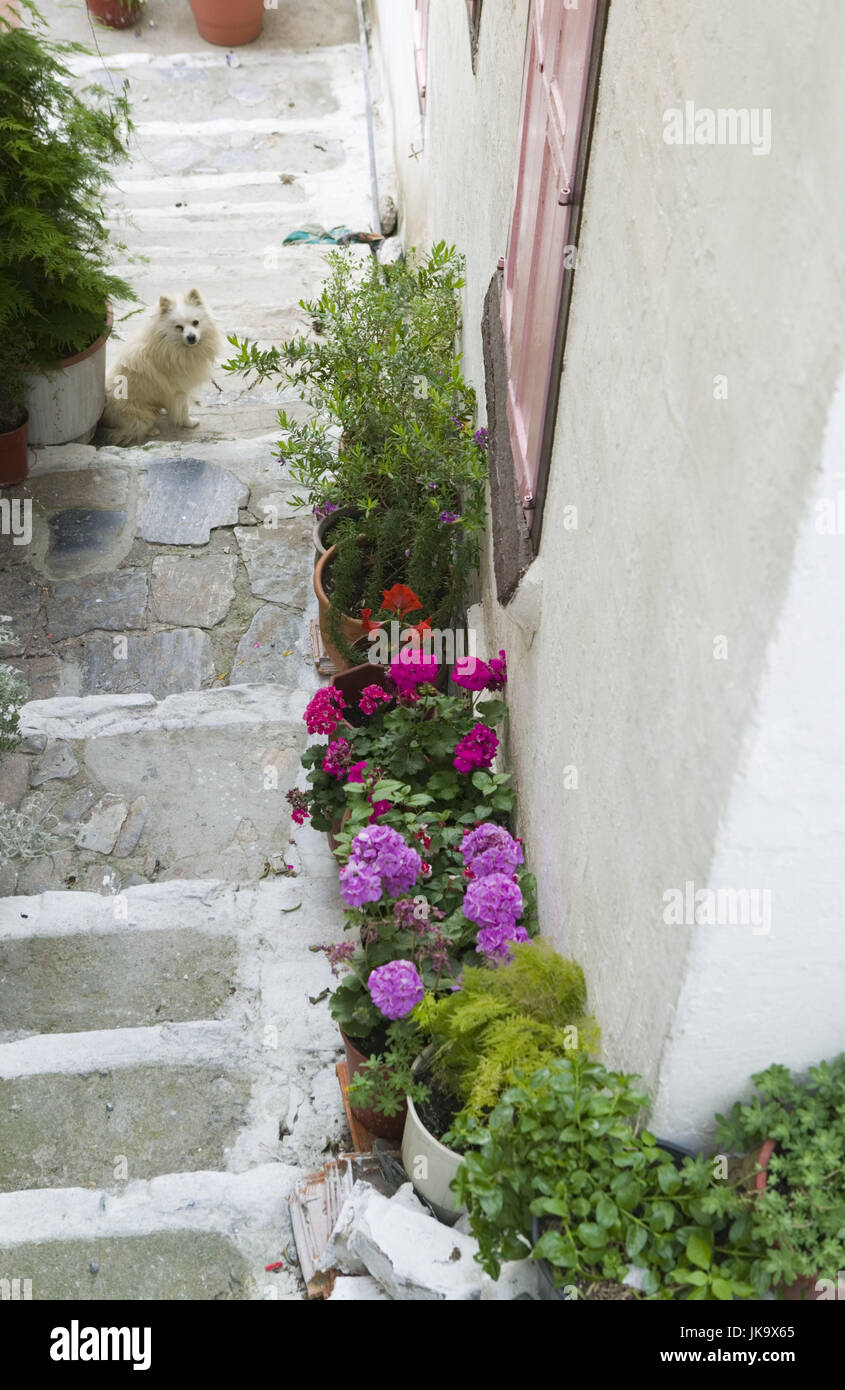 Griechenland Insel Samos Samos Stadt Altstadt Treppe Blumen