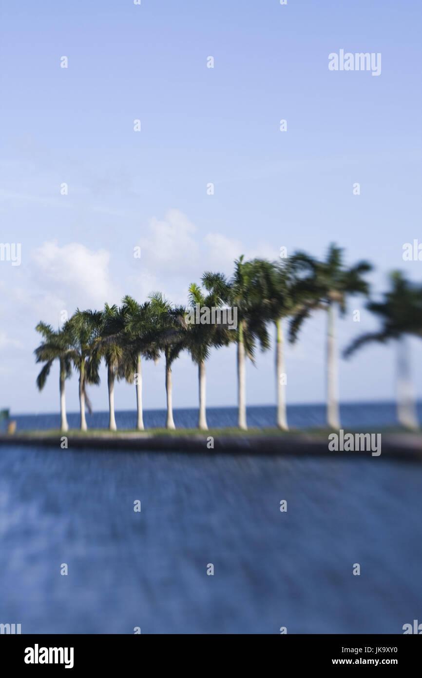 USA, Florida, Miami, Cutler Ridge, Deering Estate, Landzunge, Palmen, Unschärfe, Nordamerika, Reiseziel, Sehenswürdigkeit, Stockbild