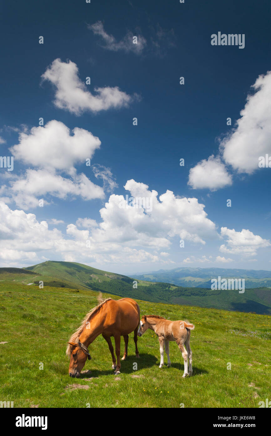 Bulgarien, Mittelgebirge, Troyan, Troyan Pass, Höhe 1525 m, Pferde Stockbild