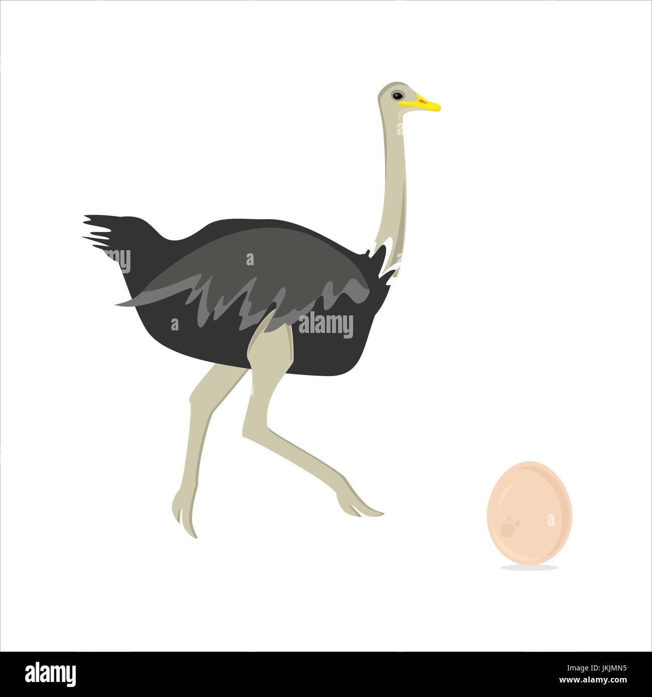 Vektor Illustration Afrikanischen Vogel Strauß Und Strauß Läuft Ei