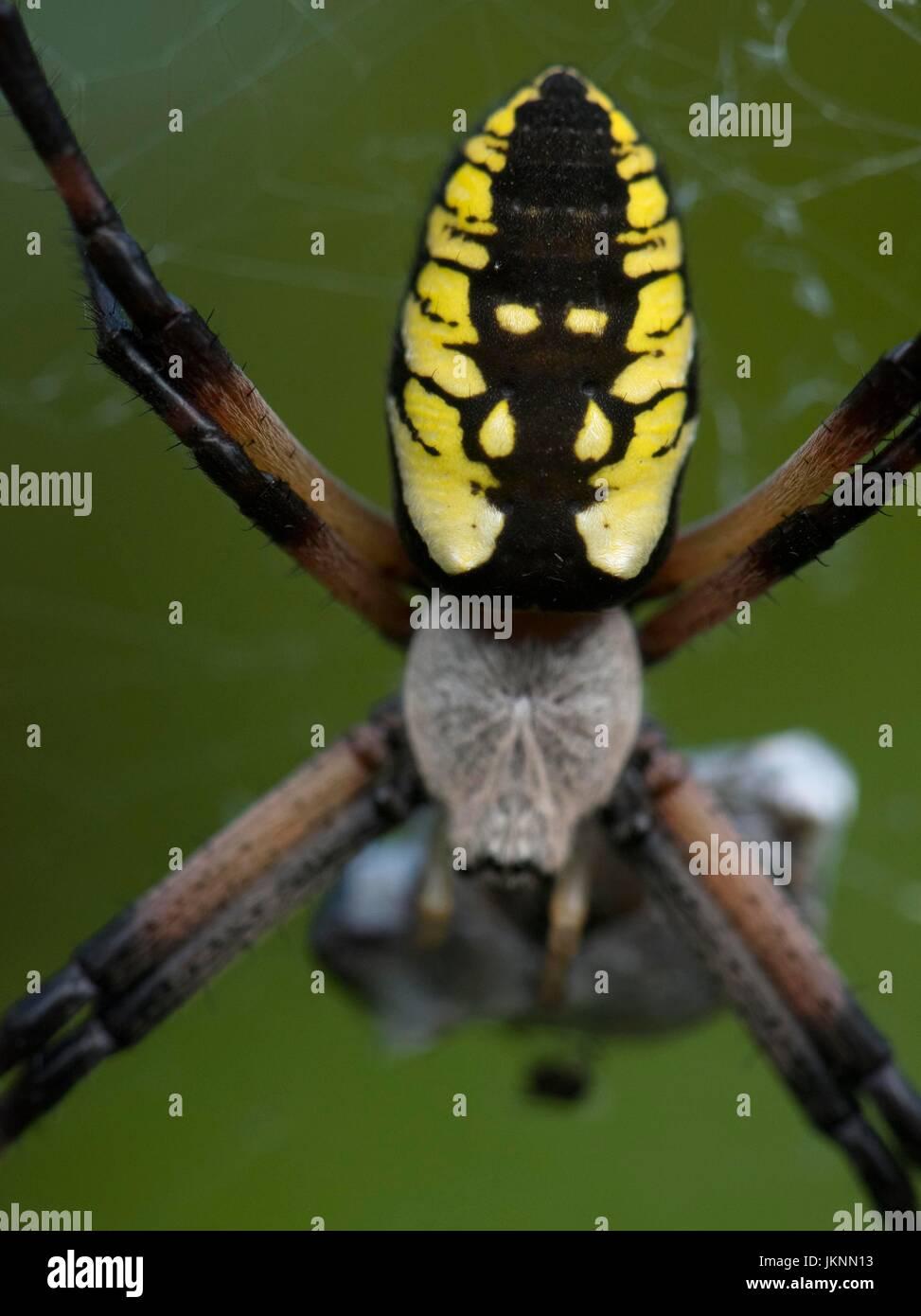 Großartig Insekten Aus Kupferdraht Zeitgenössisch - Der Schaltplan ...