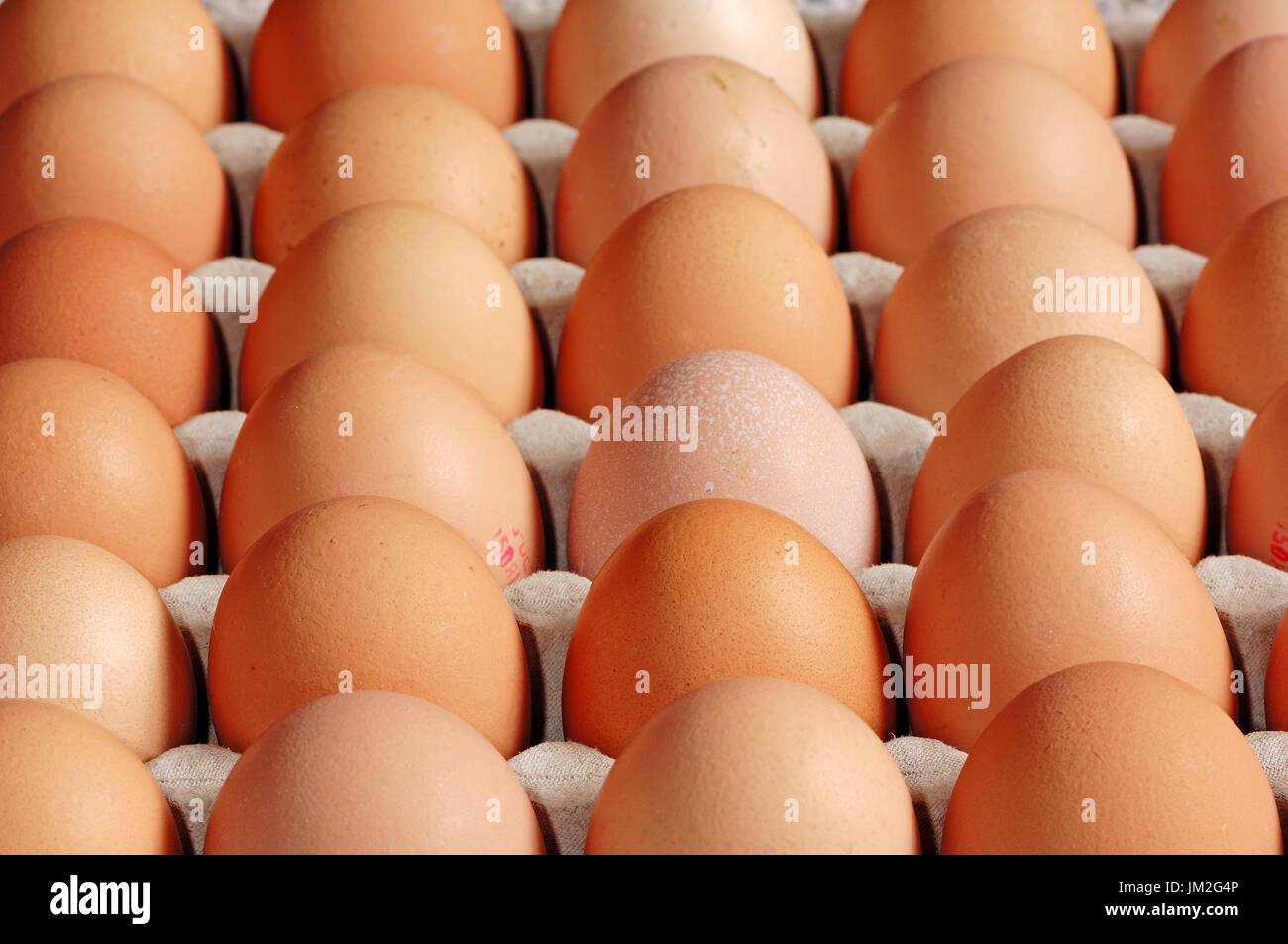 Geflügel, Eiern | Haushuhn, Eier / Hühnereier, Ei Stockbild