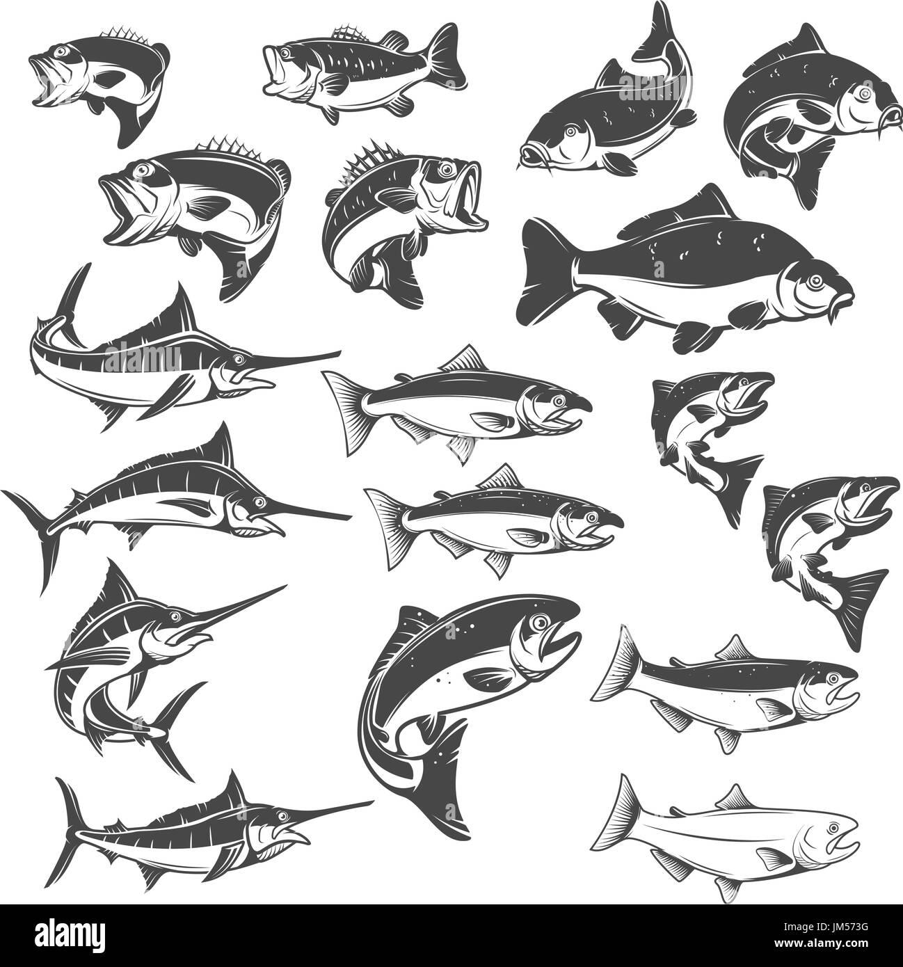 Fisch-Illustrationen auf weißem Hintergrund. Karpfen, Bass Fisch ...