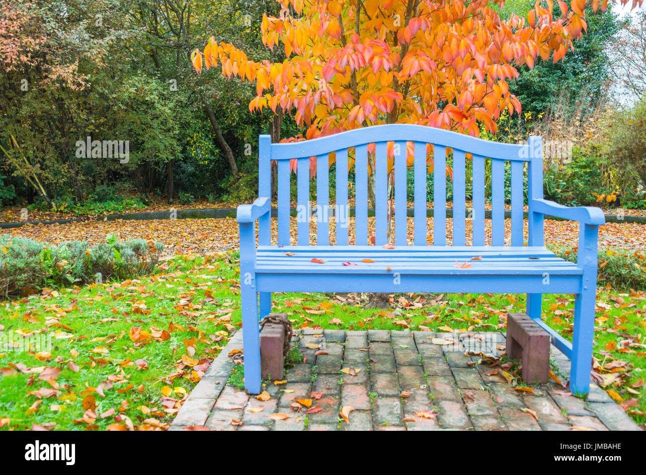 Himmelblau-Bank im Park mit Farbe Orange Herbst Baum Stockbild
