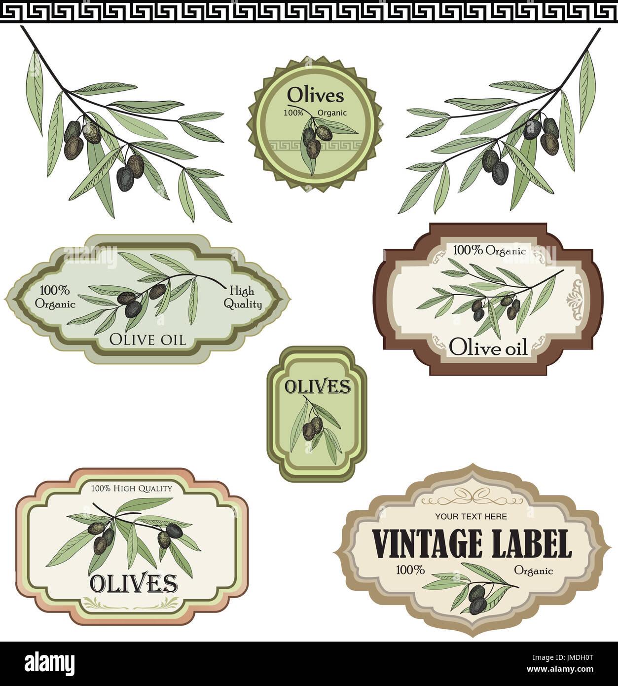 Vintage olive set Etiketten. Bio Lebensmittel farbige Skizze Zeichen ...