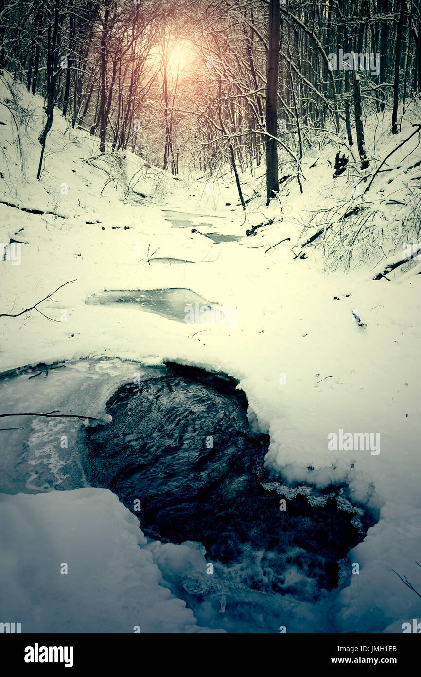 Teich im Winterwald Stockbild