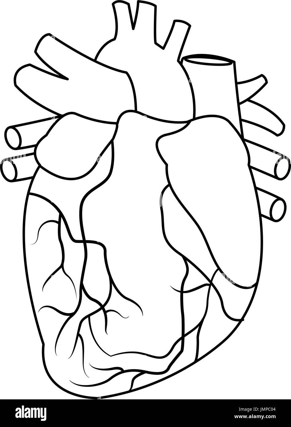 Anatomie des menschlichen Herzens Abbildung Vektor Abbildung - Bild ...