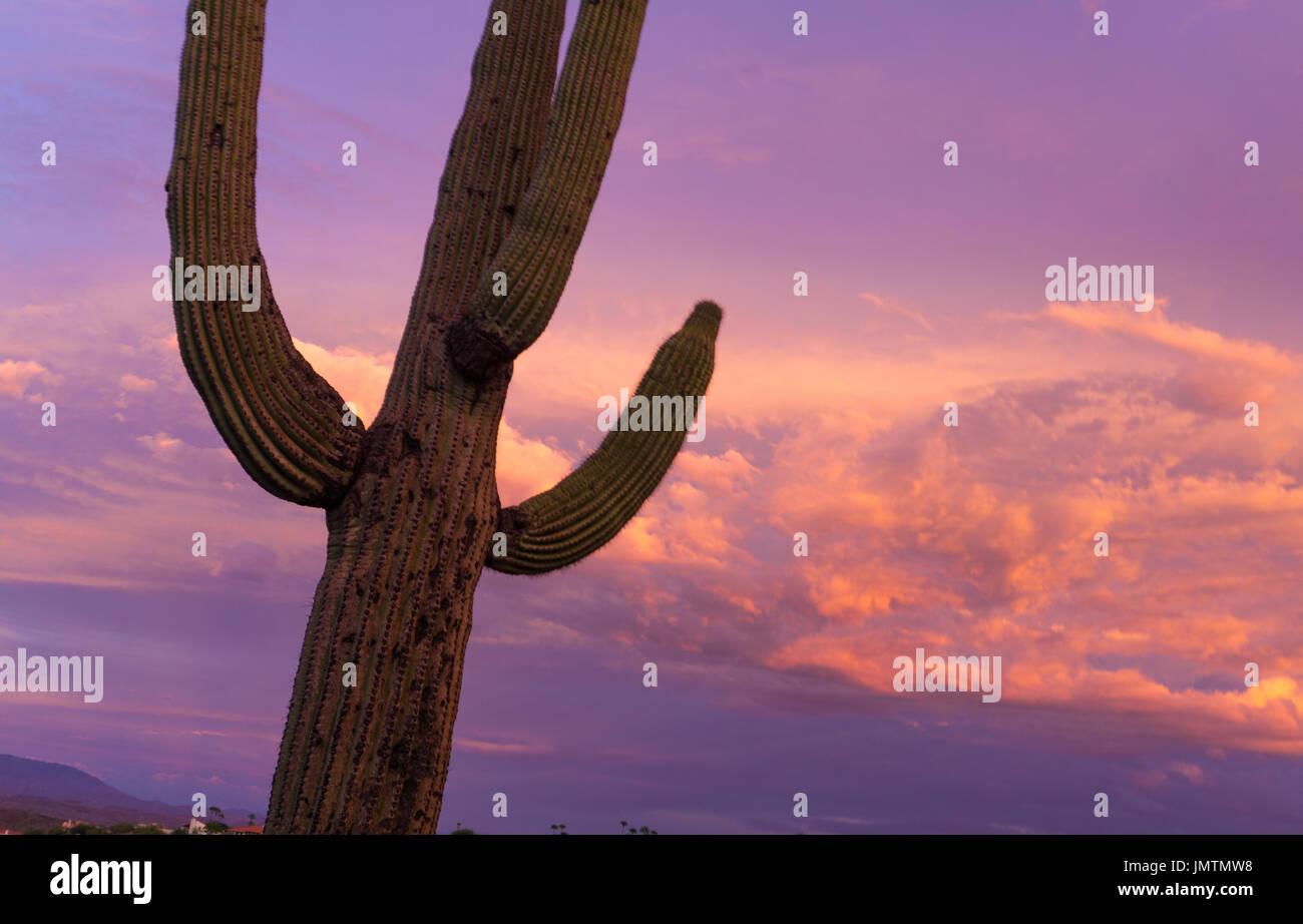 Sonnenuntergang mit ein Kaktus in Fountain hills Arizona. Sonnenuntergang in Arizona kann sehr bunt und fotogen Stockfoto