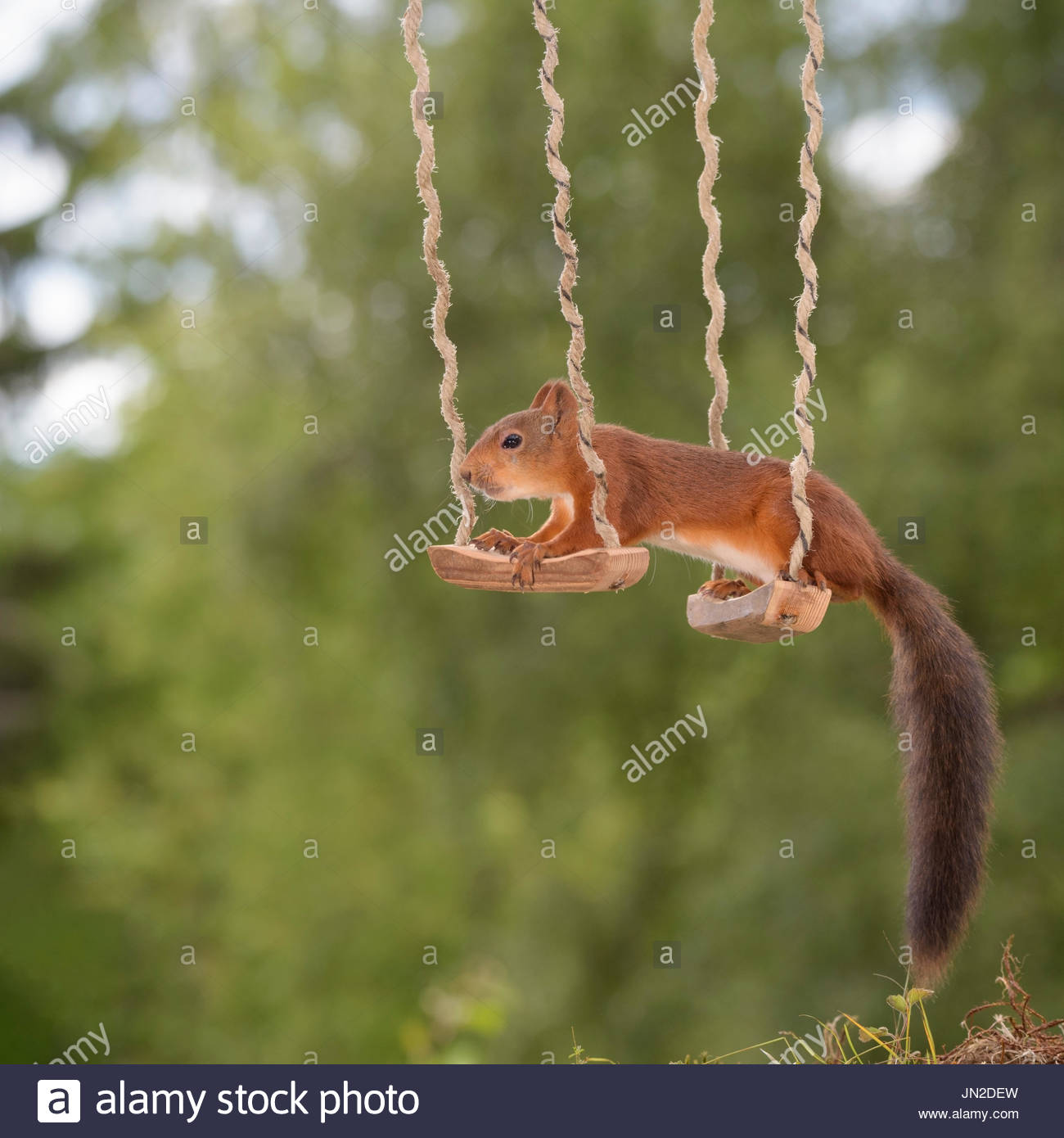 Animal Two Humor Stockfotos & Animal Two Humor Bilder - Seite 22 - Alamy