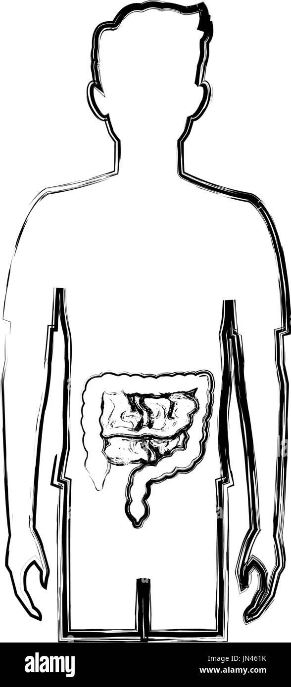 Mensch Körper Anatomie Darm Vektor Abbildung - Bild: 150683279 - Alamy