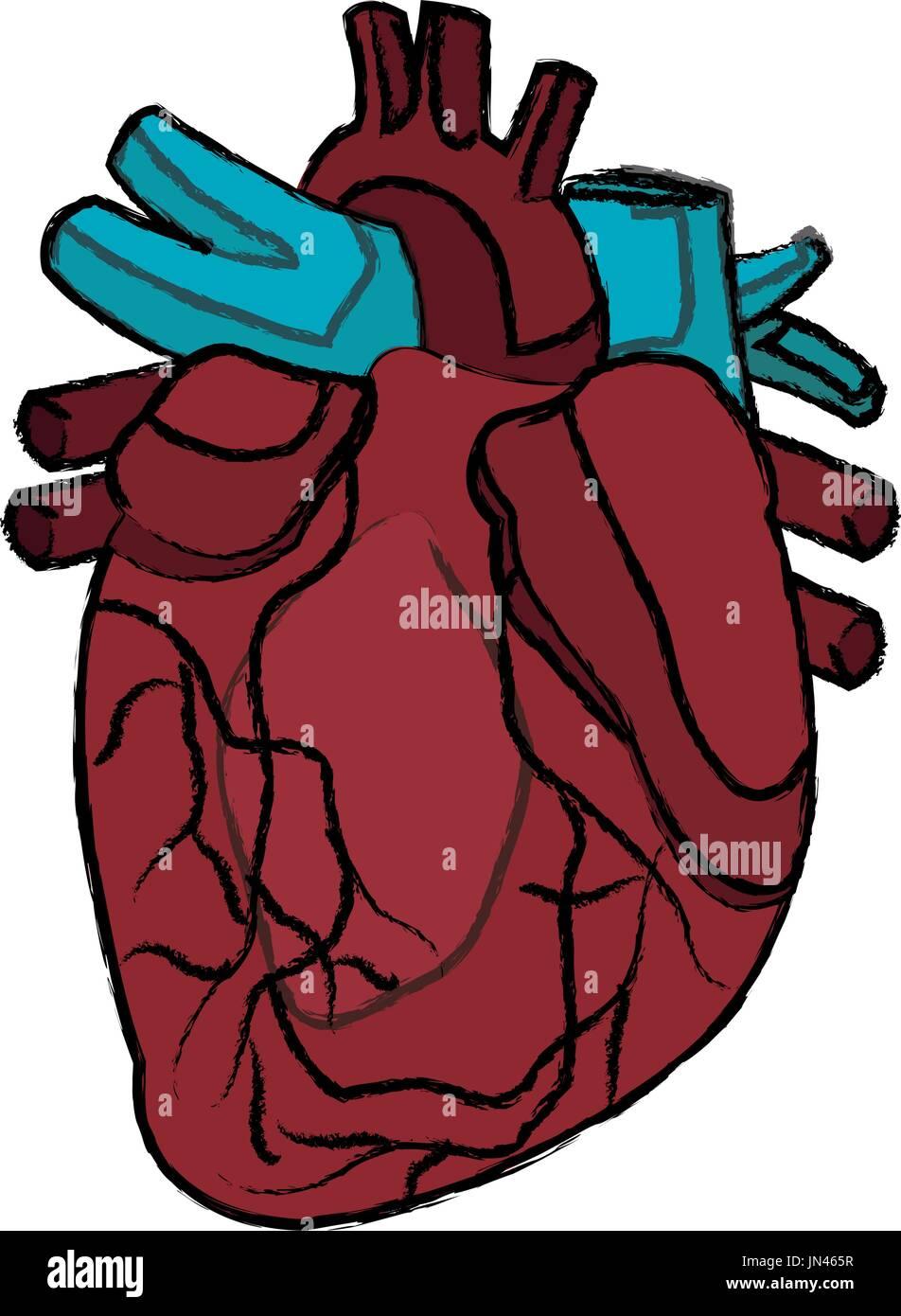 Niedlich Oberfläche Anatomie Des Herzens Zeitgenössisch ...