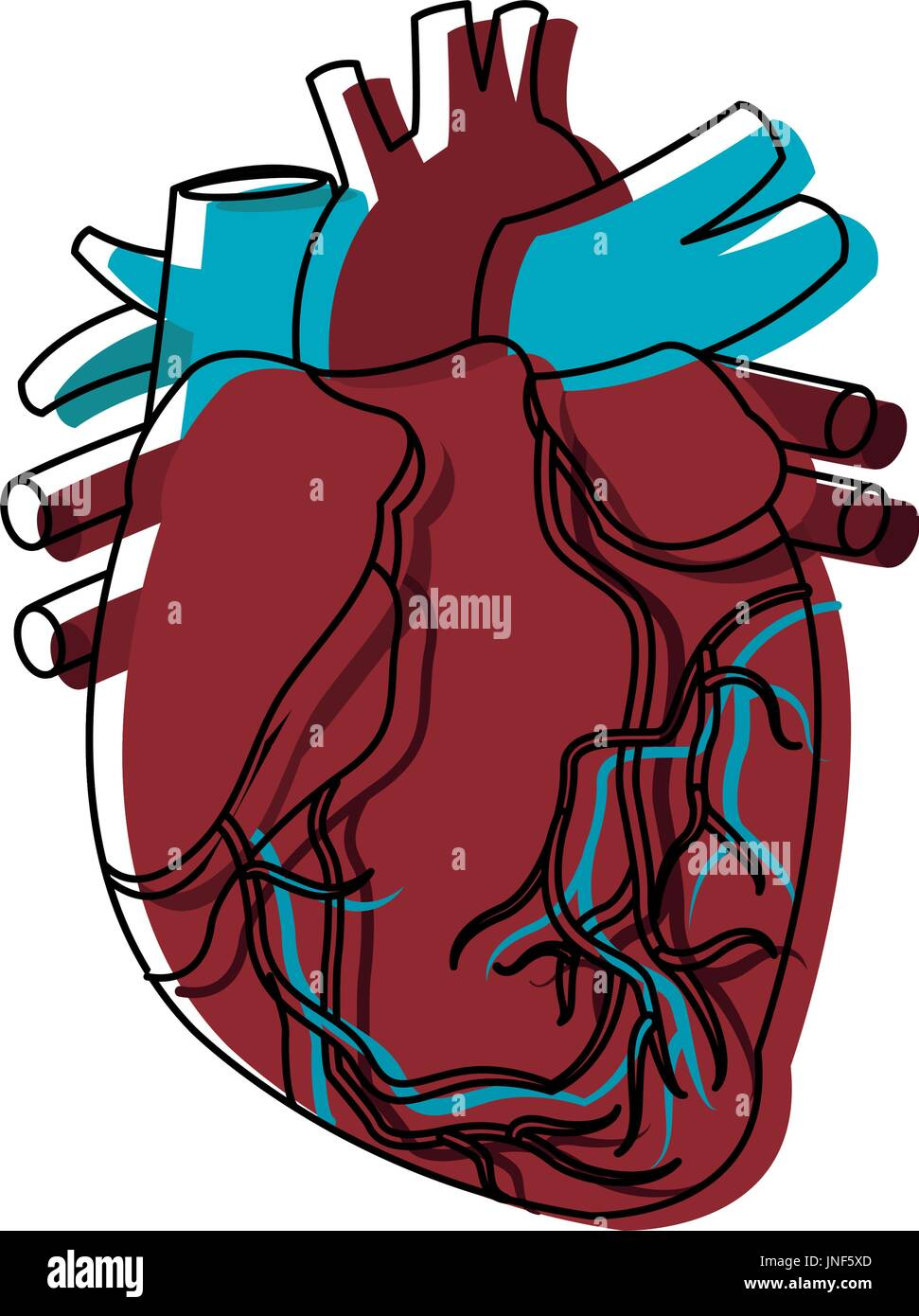 Heart Ventricle Stockfotos & Heart Ventricle Bilder - Alamy