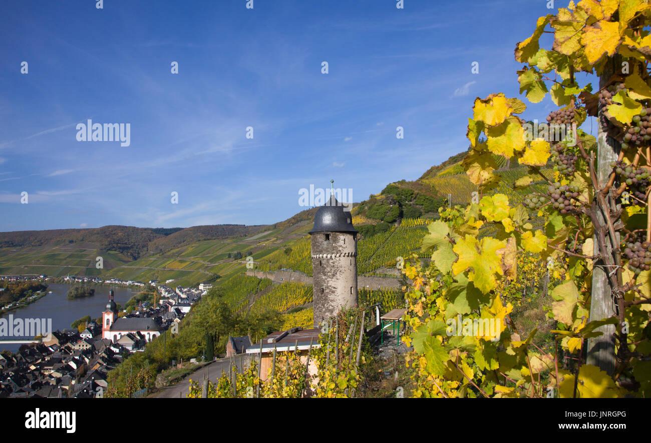 Reife Weintrauben bin Weinstock, Blick Auf Zell Und Runder Turm, oberste Turm der Ehemeligen Stadtbefestigung Und Wahrzeichen der Stadt Zell, Landkrei Stockbild