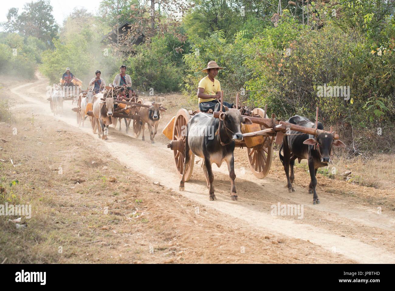 Cow Pulling Wagon : Cows pulling cart stockfotos bilder