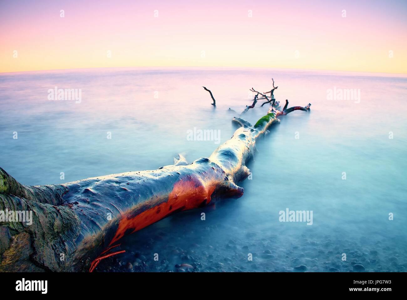 Romantischer Sonnenuntergang Zeit. Einsame umgestürzten Baum auf leere steinigen Küste. Rosa Himmel über glatte rauchigen Wasserstand. Tod-Baum mit Ästen im Wasser, nake Stockbild