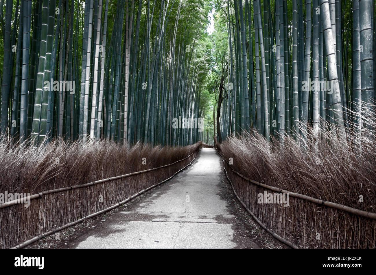 Pfad Im Bambuswald Arashiyama Im Winter Japan Stockfoto Bild