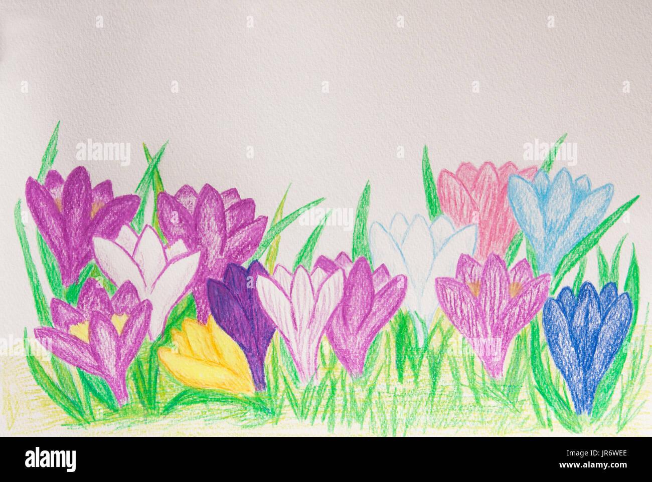 Einige Erste Frühling Blumen Krokusse Verschiedener Farben Auf