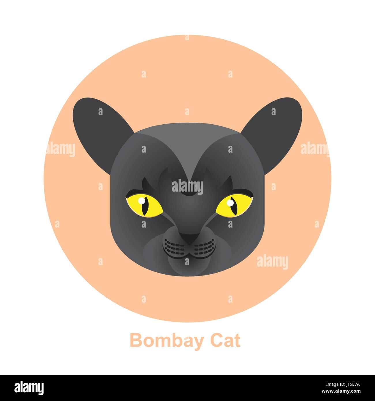 Katze Läuft Im Kreis