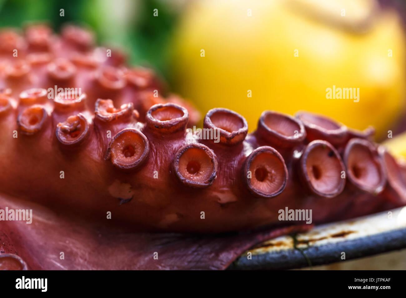 Octopus Tentakel Ansicht schließen, selektiver Fokus Stockbild