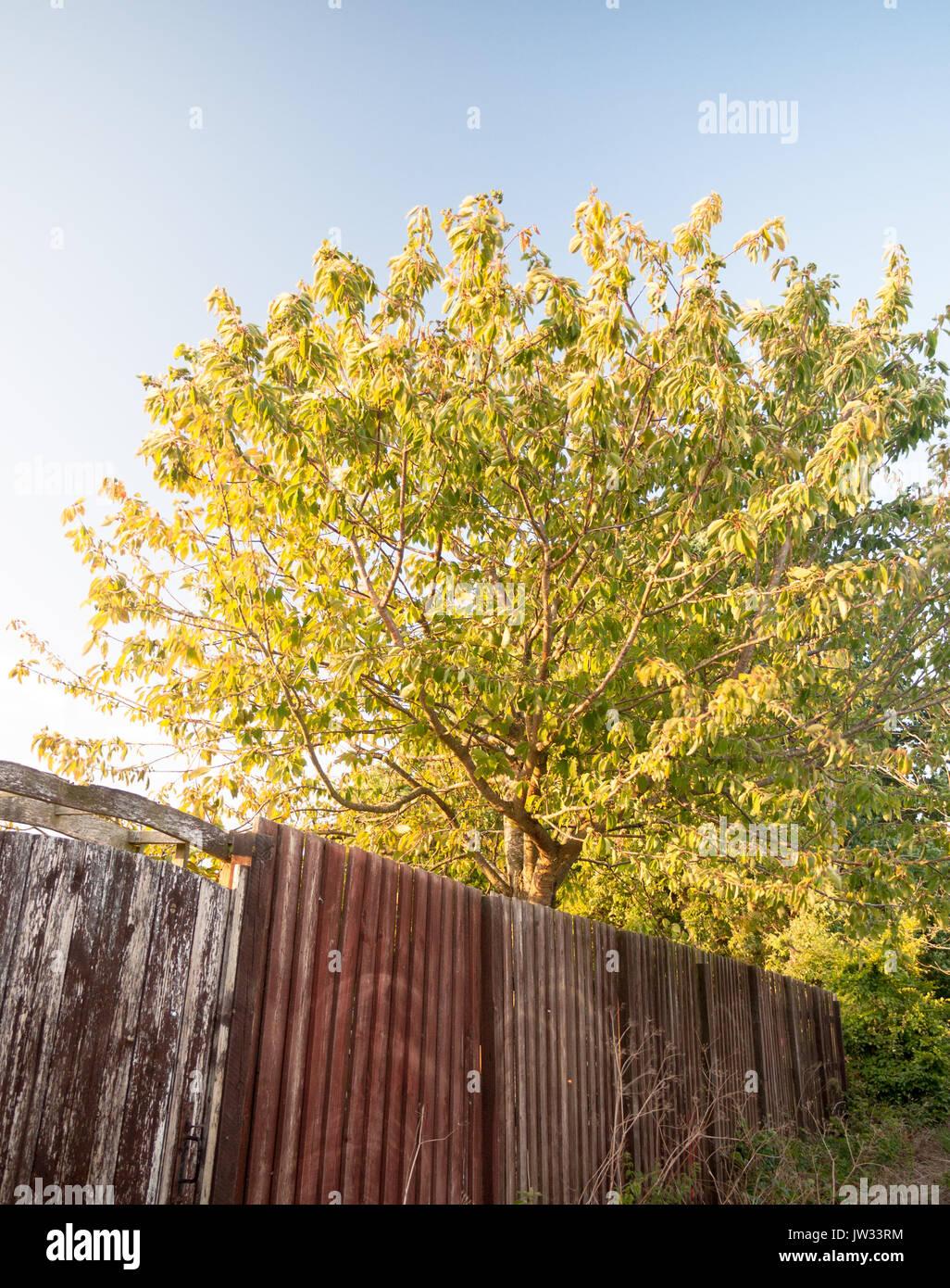 Baum Garten in der Sonne Sonnenlicht und einem Holzzaun VK