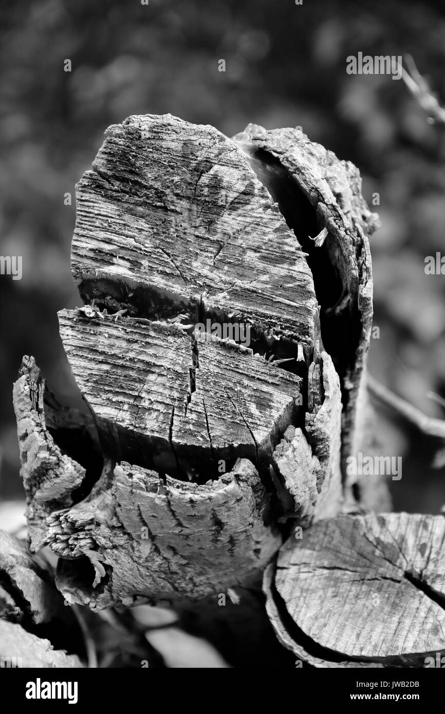 Holzstamm, Holz eigenwillig Stockbild
