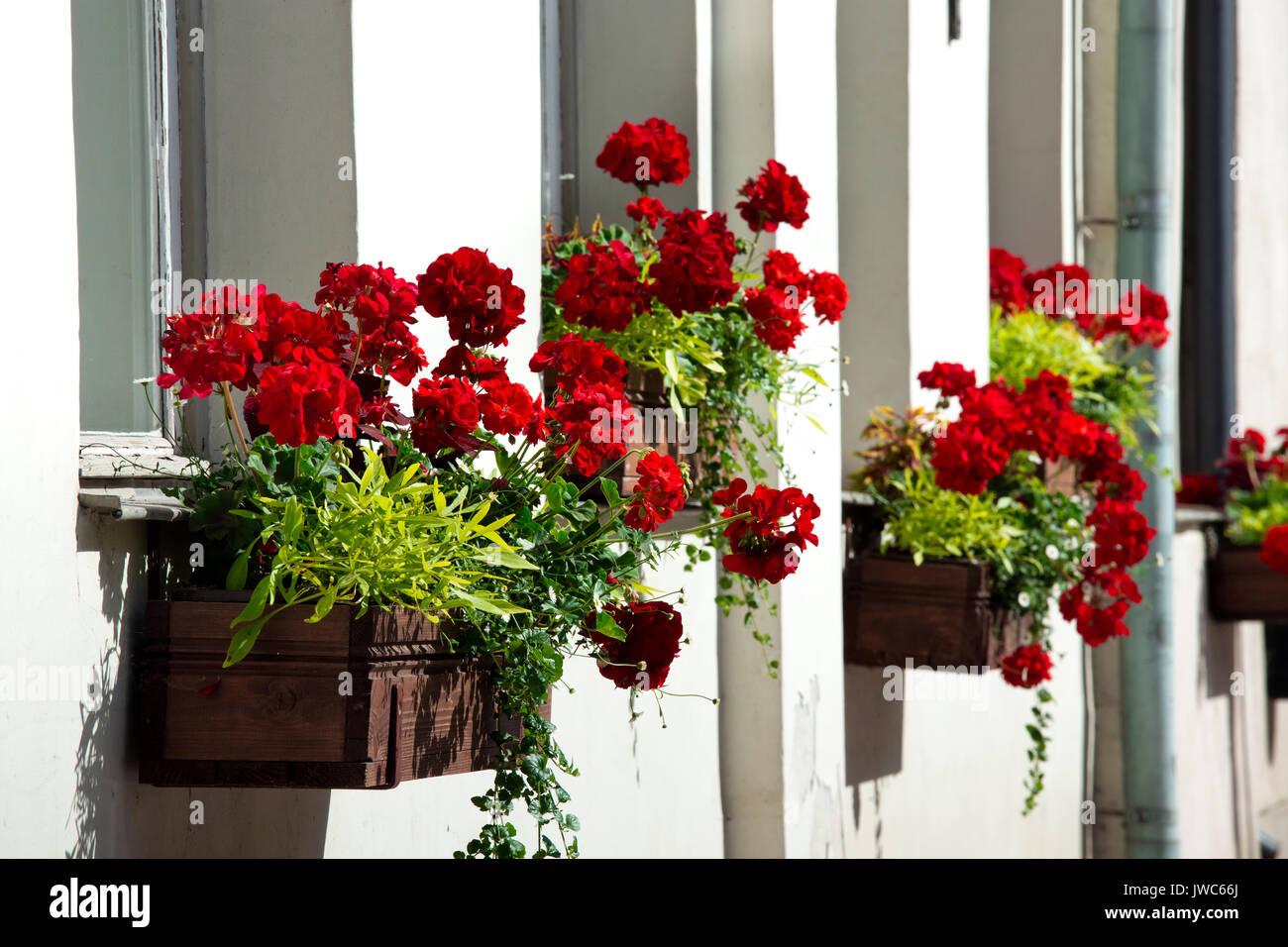 Rote Blumen In Kisten Aus Holz An Der Wand Bluhende Pflanzen Auf