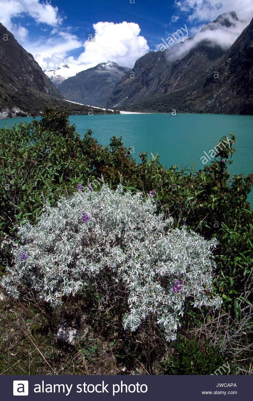 Ein malerischer Blick auf den See, Montane und Wildblumen in voller Blüte entlang der Küste. Stockbild