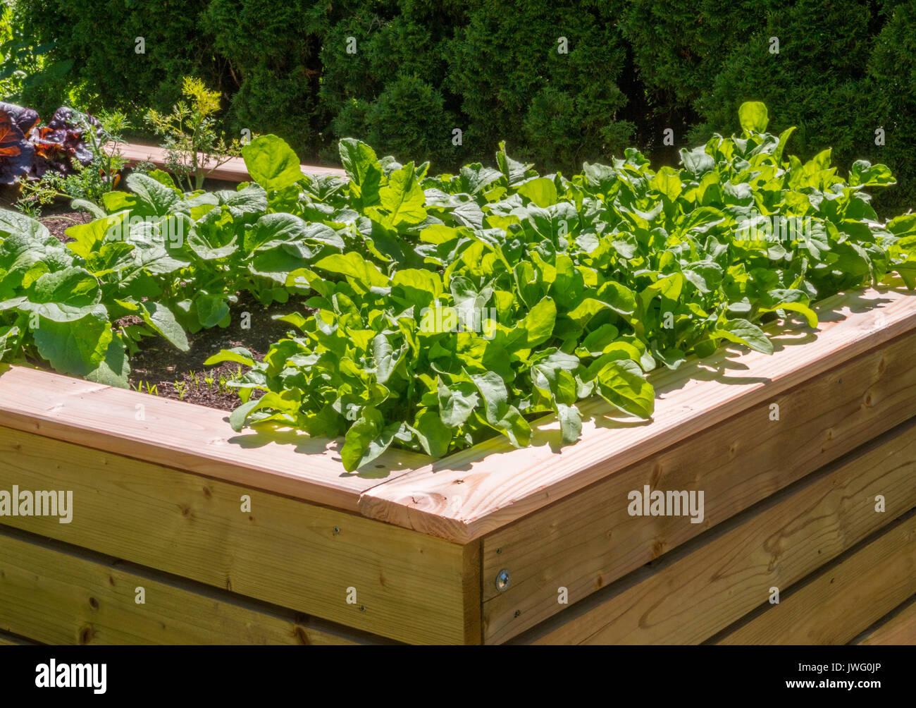 Hochbeet Mit Salatpflanzen Im Krautergarten Am Kloster Inzigkofen