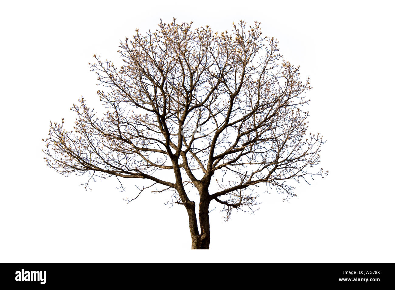 silhouette bare oak tree no stockfotos silhouette bare oak tree no bilder alamy. Black Bedroom Furniture Sets. Home Design Ideas