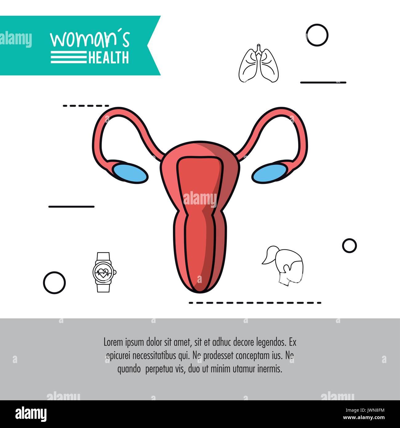 Human Reproductive System Stockfotos & Human Reproductive System ...